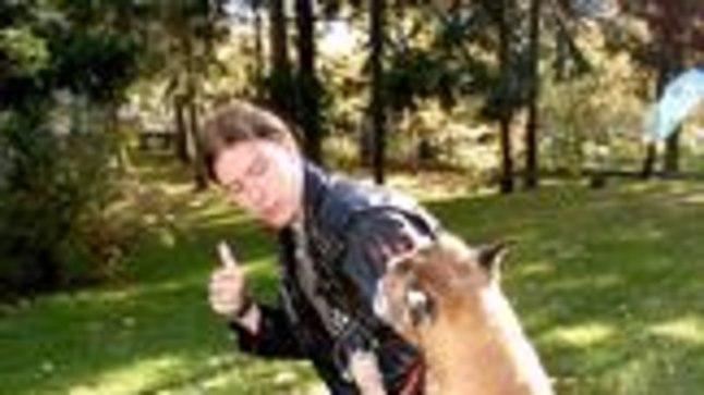 KODUVALVUR ARESTIS: Pererahva äraolekul võib koer üle võtta nn. karja juhi ehk peremehe ülesanded ning asuda kas täie tõsidusega kodukaitsele või sundida võõrast tundideks ühele kohale paigale. Tegelikult on bokserid ülirõõmsad ja sõbralikud olevused.