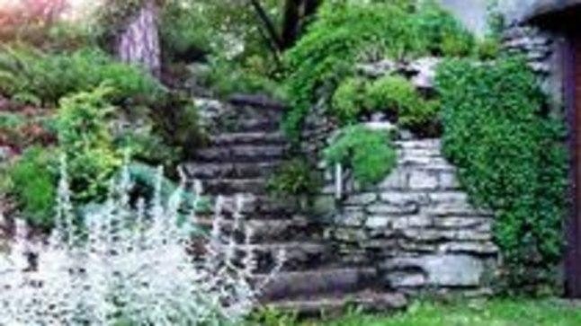 ÕIGE TAIM ÕIGES KOHAS: Umbrohuna tuntud müürilill paelub paesel müüril tõepoolest pilku. Lille võib julgelt piirata, sest nagu ikka on umbrohul meeletu kasv ja elutahe.
