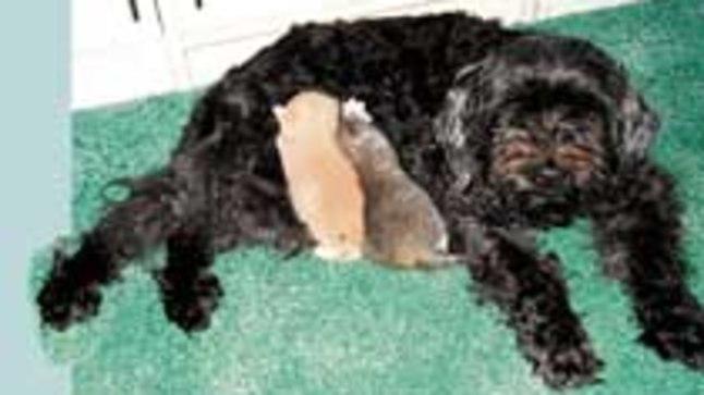 KASUEMA: Kümneaastane Nipu võttis kaks kuuvanust kassipoega kohe omaks.