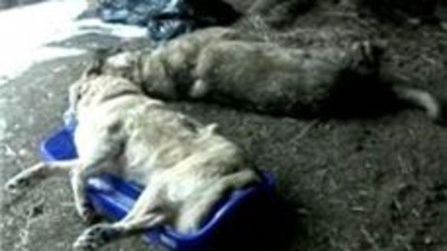 Mullu veebruaris laskis Mirek Matikainen Kullengas peremeeste silme all maha kaks koera.