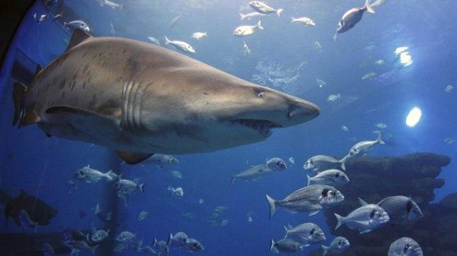Naise tupeeritis sisaldab sama komponenti, mida on leitud hai maksast.