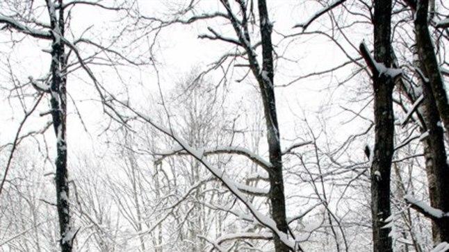 LEITI METSATUKAST: 21aastase neiu surnukeha leiti möödunud laupäeval Audru kalmistu juurest metsatukast.