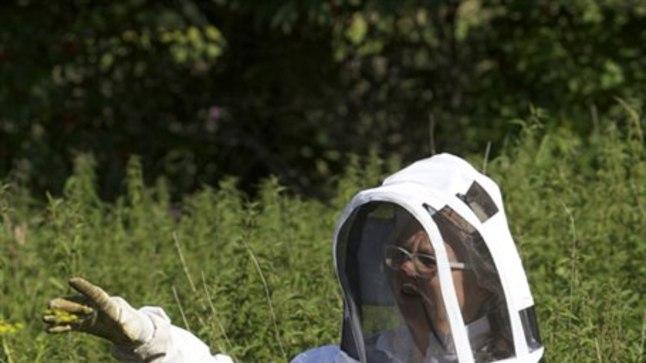 ETTEVAATUS ENNEKÕIKE: Aastaid mesilastega tegelnud Eha Kooser on korra nõelajate tõttu vajanud ka esmaabi ja teab seetõttu, et oma töös on tal kaitseriietus äärmiselt oluline. Samas – niisama aasal jalutajale ei tohiks mesilased tema sõnul endast ohtu kujutada.