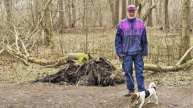 PARK VÕI METS VÕI PARKMETS: Jaak Valgemäe sõnul saaks metsast parkmetsa õige lihtsate vahenditega ning kui asi korras, võiks linn ja riik edasi  vaielda.