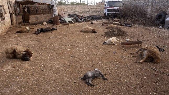 OHVRID: Süüria mässuliste kinnitusel hukkusid need loomad tänavu märtsis Aleppo lähedal keemiarünnakus.