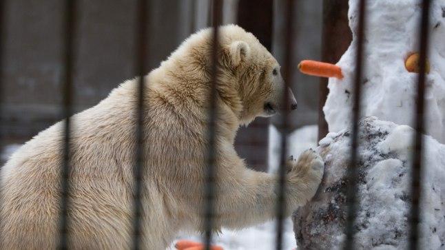 Väike vallatus: Rõõmus peoperenaine Nora  lükkas lumememmest suurema vaevata  kummuli.