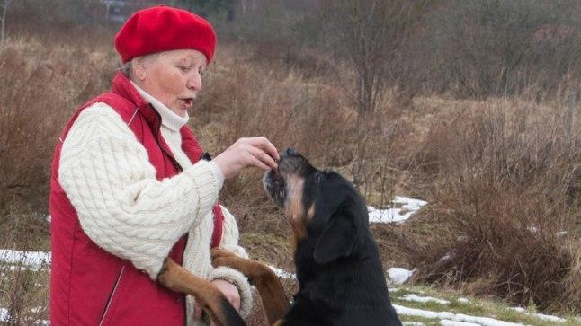Hästikasvatatud koer: Koolitaja Sirje Vetsi koera Reweij Beb-Wrigleyt kartma ei pea, sest teda on maast madalast õigesti õpetatud.