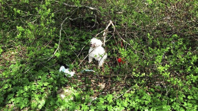 NUKRAS SEISUS: Aastaid ustavalt peremeest teeninud koerake jäeti võpsikusse surema. Kes on süüdi, kas omanik, omaniku lähedased või mõni võõras? Küsimusi on rohkem kui vastuseid.