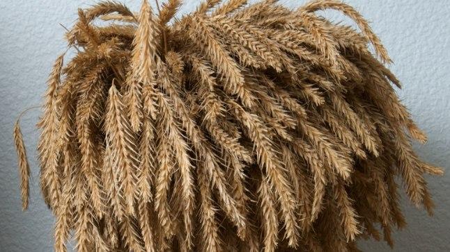 Rukis on üks neljast tsöliaakiahaigetele keelatud teraviljast.