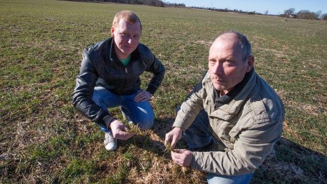 Rae valla põllumees Meelis Aaslaid ja poeg Eduard (vasakul) loodavad, et öökülma ei tule.