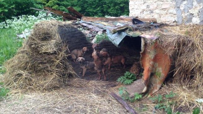 ÕUDUS KUUSALUS: koeravabrikus elasid loomad väikestes puurides enda rooja sees