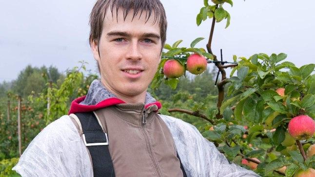 Kas panna keldrisse või teha mahlaks? Selles, kui kaua teie koduaias kasvavad õunad säilivad, tasuks Lauri sõnul uurida vastava sordi aretajalt või puukoolist.