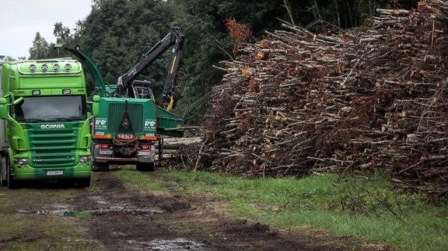 HAKKURIST LÄBI JA ELEKTRIKS: Valitsus tahab Narva elektrijaamades hakata massiivselt puitu põletama – ligi kolmandiku kogu tänasest raiemahust. Kui 2011. ja 2012.aastal suures mahus puid põletati, tõusid küttepuu hinnad tavatarbijatele nii, et tuba oli vaat et odavam kütta õliradiaatoritega kui halupuudega.