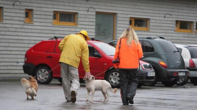 OTSUS ON TEHTUD: Tallinnas kinni püütud kodutud loomad jäävad juuni lõpuni Varjupaikade MTÜ hoida.
