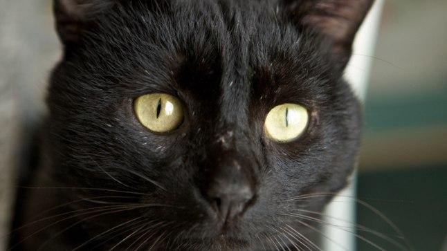 Musta Kassi Kuu : Halloween vabastab mustad kassid n?idusest ?htuleht