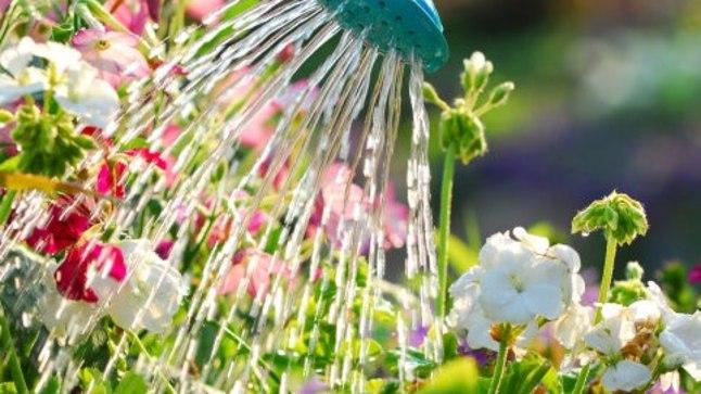 Peenramaal aitab niiskust hoida see, kui katad mullapinna niidetud rohuga.