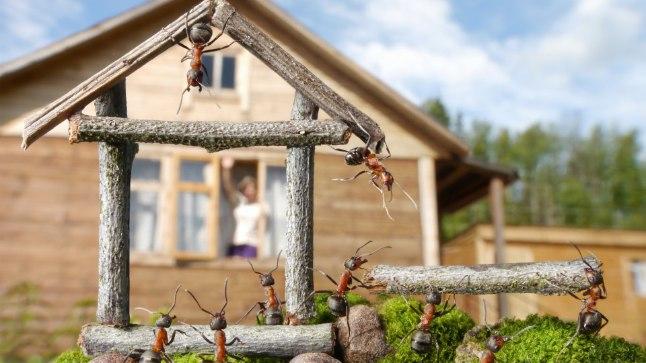 Sipelgad saab oma majast lihtsate nippidega välja kupatada