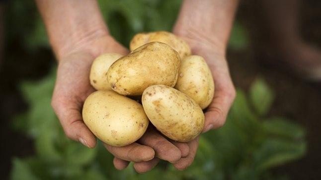 Värske kartuli noorendav näomask - tasub proovimist!