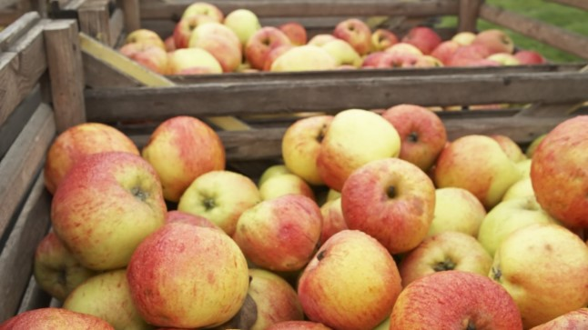 Õunad moosi asemel näomaskiks