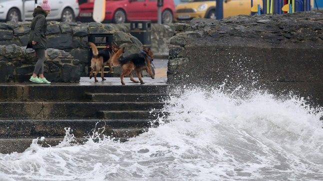 OPHELIA LÄHENEB: Naine tõi Põhja-Iirimaal Donaghadee kaunis rannikukülas enne tormi kasvamist täisjõuni oma koerad jalutama.