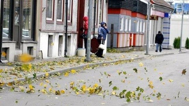 Tuul lennutab Viljandis lehti.