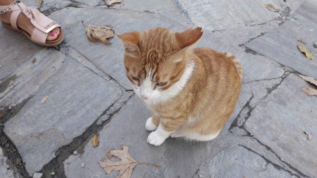 Tauruse mägikülas elav kass.
