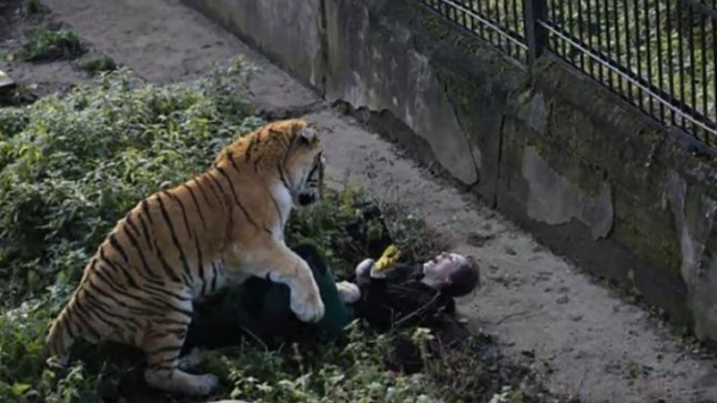 Kaliningradi loomaaias ründas tiiger talitajat.