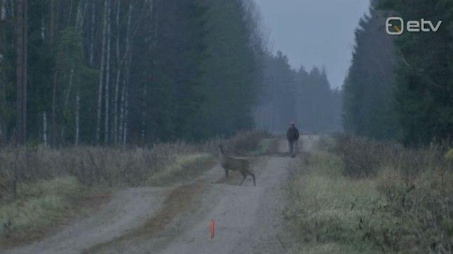 Ajuloendus kinnitas, et Viljandimaal on metskitsede arvukus tõusnud.