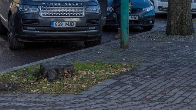 Georg Otsa tänaval on puude väljalangemine eriti silmatorkav.