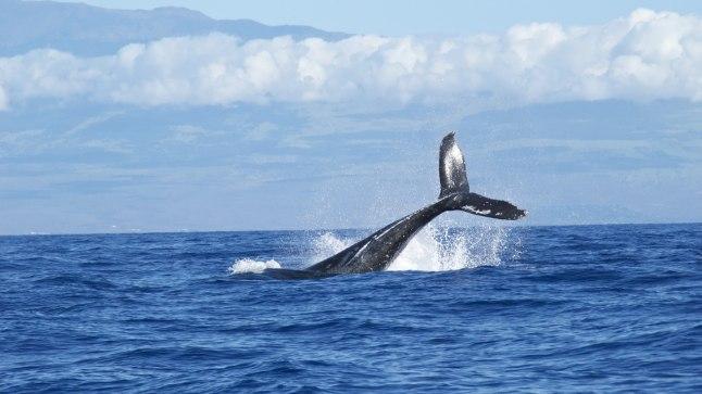 TERAKE TEADUST: kas vaala saab elektriga püüda?