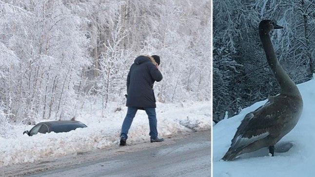Tartumaal sõitis autojuht linnu pärast teelt välja.