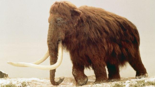 Karvane mammut