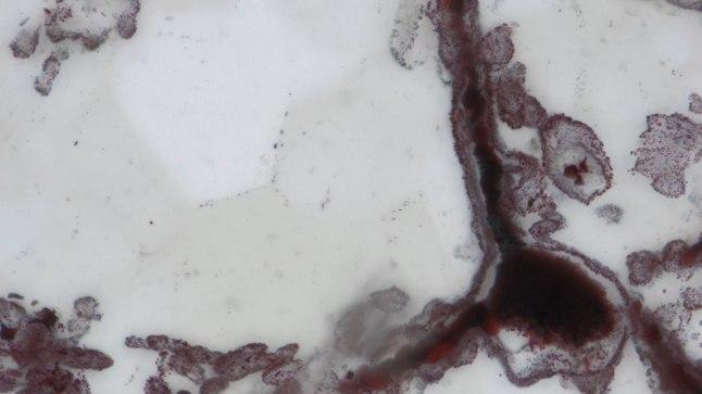 KUNAGINE MIKROOBIRAKK? Rauakänkra küljes olev hematiidiniidike meenutab tänapäevaseid baktereid, mis elutsevad ookeanipõhja kuumaveeallikate juures. Pilt katab umbes 500 mikromeetri laiuse ala.