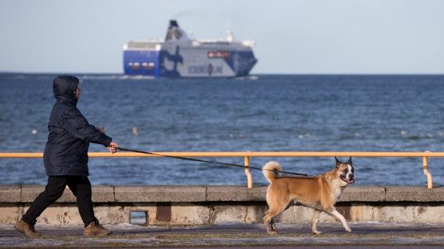 KEVADINE ILM TALLINN, EESTI, 18FEB17. PƤike, kevadine ilm, kevad, Kadrioru park, Pirita tee, Pirita rand. Meri, laev, jalutaja, koer rihma otsas. Foto: LIIS TREIMANN/POSTIMEES