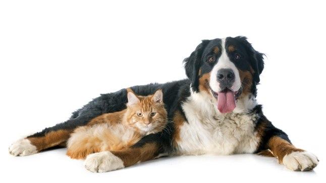Iga koera- või kassiomanik teab, kui raske võib olla lemmiku jooksuaeg.