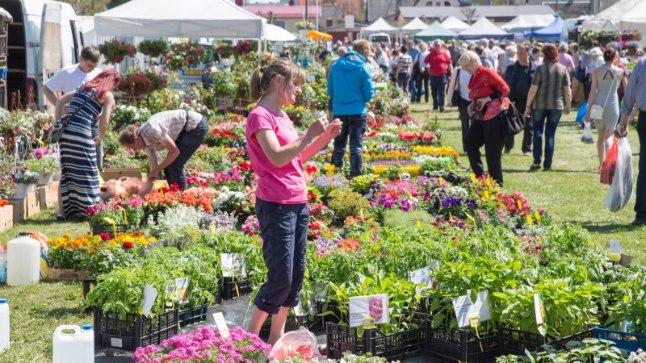 Lillelaadal pakutakse erinevat kaupa, kuid külastajatel on kõige rohkem näpus taimi.