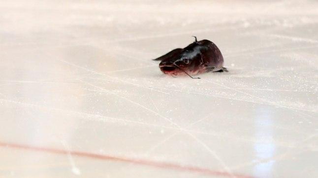 Surnud säga satub tihti Nashville Predatorsi hokimängu eel või ajal jääle.