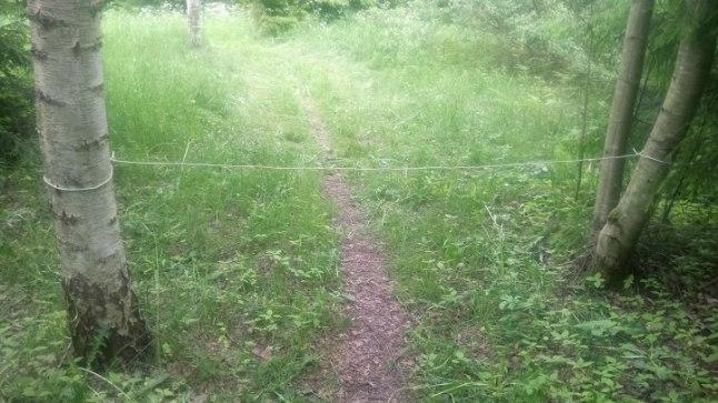 TRAAT: Tõrvandi metsa taga olla kahes kohas üle metsatee tõmmatud traadid