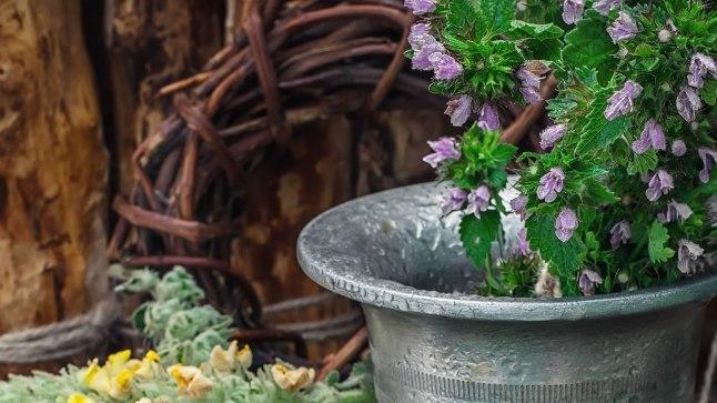 Piparmünt pole mitte ainult dekoratiivne, vaid ka väga kasulik.