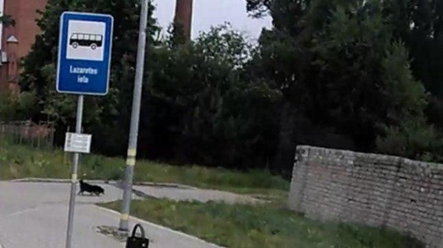 TUVASTUS VIDEOLT: Ivan Berladin bussipeatuses.