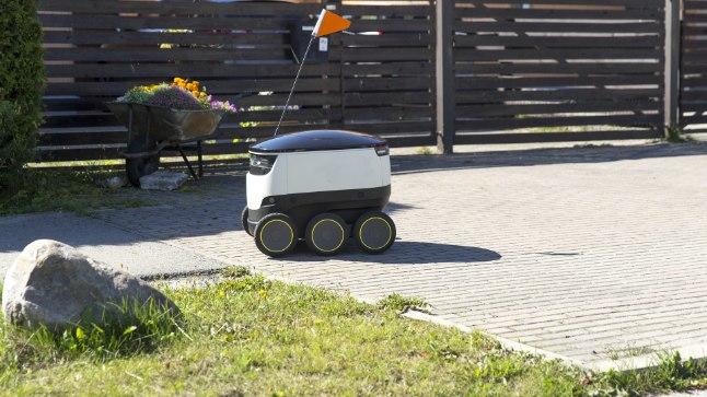 SAI HOOPE: Kakumäel pakki toimetanud robot sai peksa, kuid vuras eile vuras jälle Kakumäel ringi.