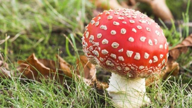 Kuidas anda esmaabi, kui oled söönud mürgist seent?