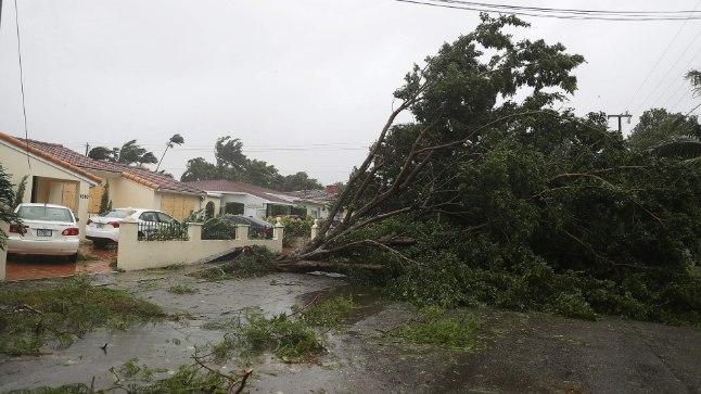 IRMA TULEKUL: Miamis kallas juba mitu tundi enne seda, kui Irma täisjõus kohale jõudis, vihma ja puid langes nagu loogu.