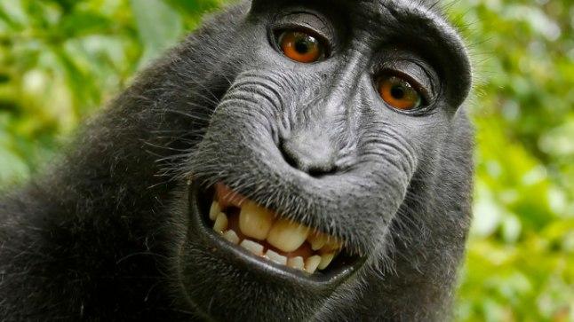 Palju au ja kuulsust, kuid ka peavalu toonud foto. Kuigi pildistajaks oli makaak Naruto, otsustas kohus, et klõpsu autoriõigused kuuluvad siiski kaamera omanikule, David Slaterile.