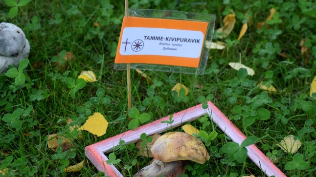 Tamme-kivipuravik Tartu loodusmaja pargis.