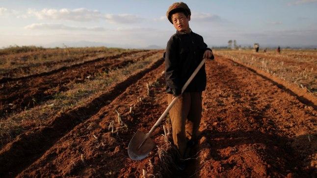 Põhja-Korea poiss põllul. Pilt on illustreeriv