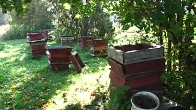 Näkialliku talu mesilastarud pärast karude rüüsteretke.