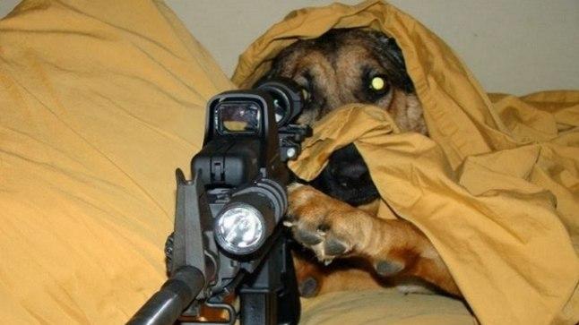 Собака <font color=&quot;#d30008&quot;>застрелила хозяина</font> из двустволки