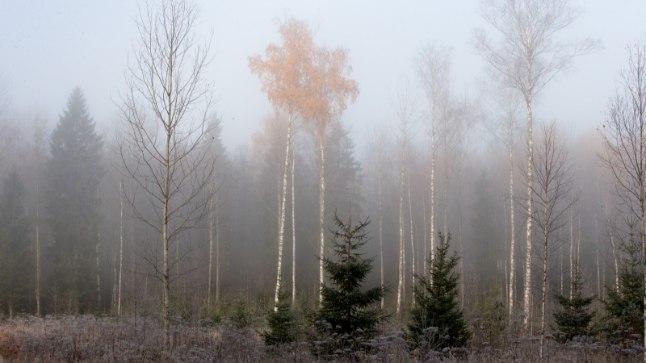 Härmas mets