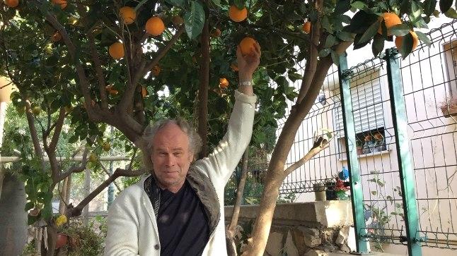 JÕULUPUU ASEMEL APELSINIPUU: Andres Mustonen talvel Iisraeli soojust nautimas.